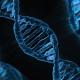 Genes sindrome tourette